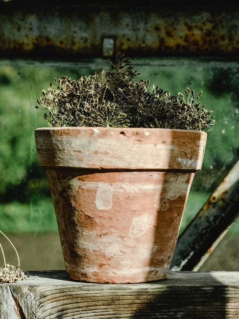 Terracotta Töpfe für den Garten