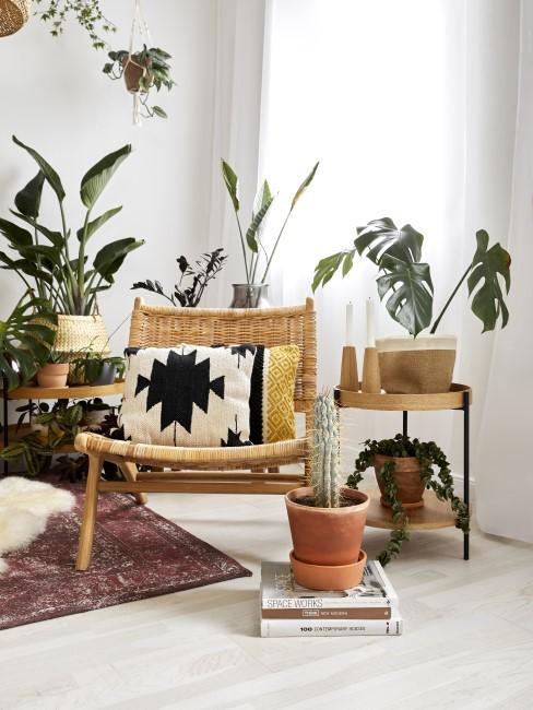Raum mit vielen Zimmerpflanzen