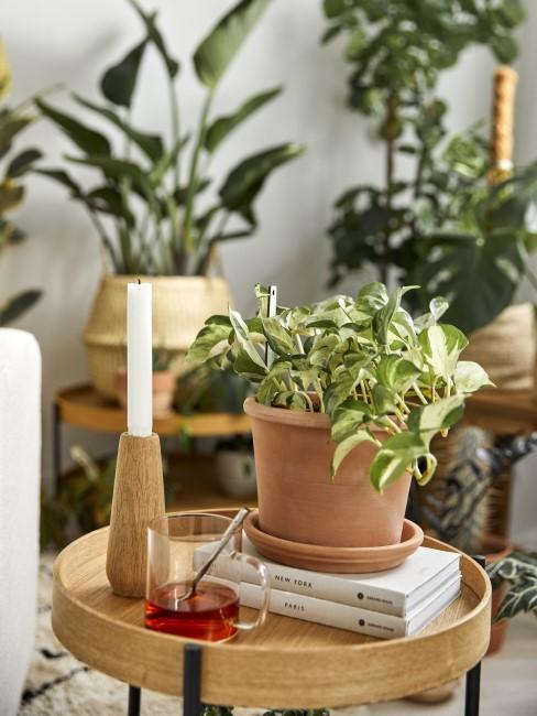 Pflanzen und andere Deko auf einem Tisch