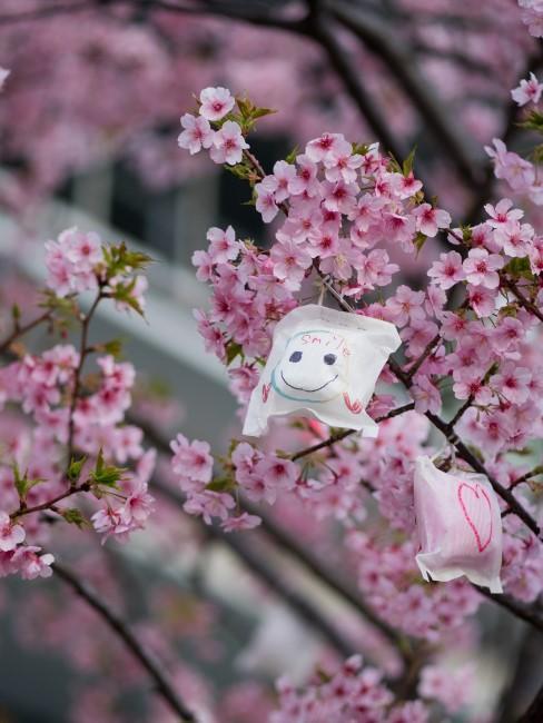 blühender Kirschblütenzweig mit Smiley