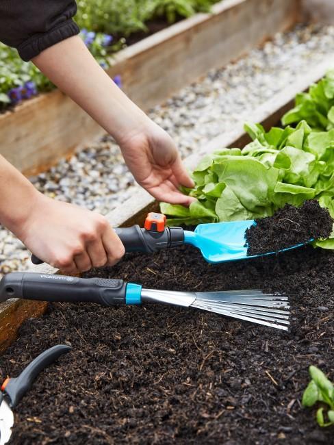 Salat und anderes Gemüse pflanzen