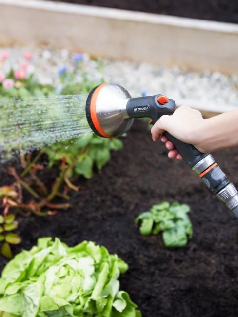Gemüse pflanzen und gießen