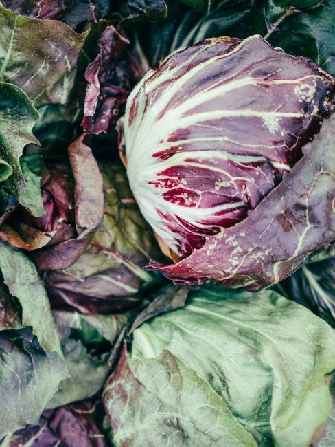 Salat aus dem eigenen Garten
