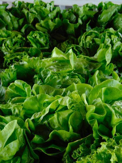 Salate als gutes Gemüse für Anfänger