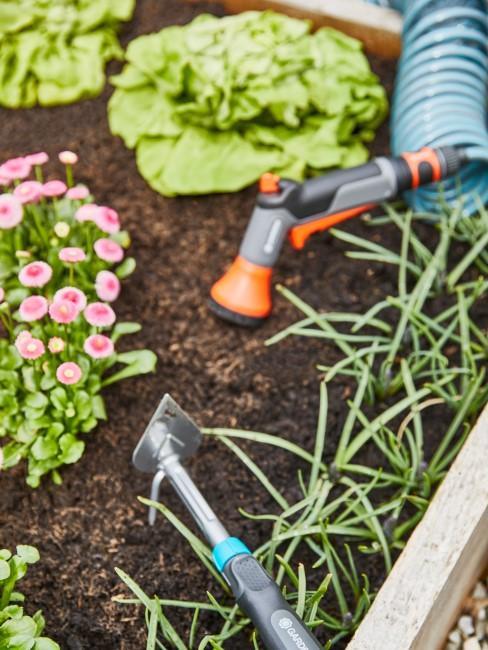 Gemüse pflanzen im Beet