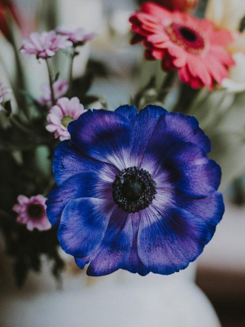 Blumenstrauß mit blauer Anemone und roter Gerbera
