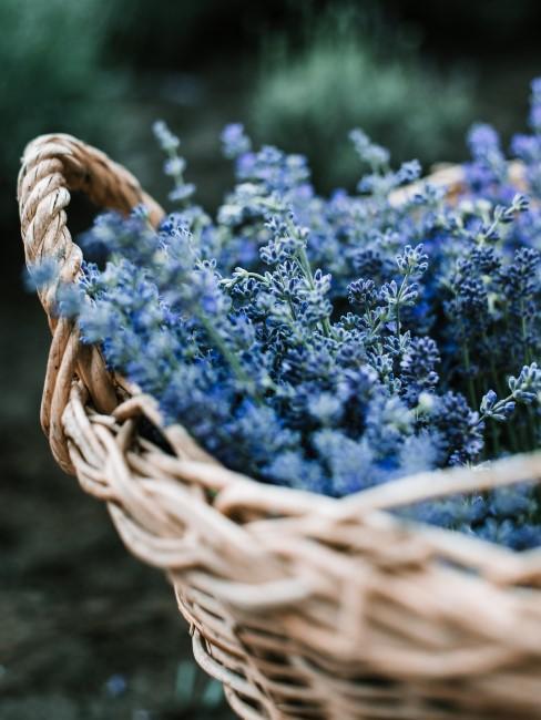 blaue Blumen in einem Korb