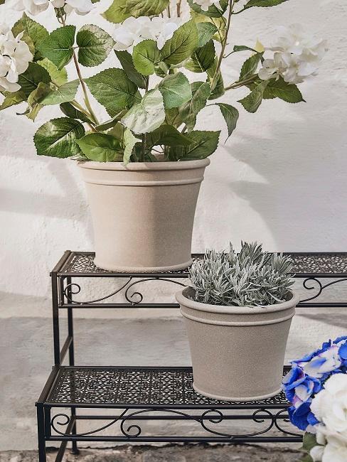 Töpfe mit verschiedenen Pflanzen
