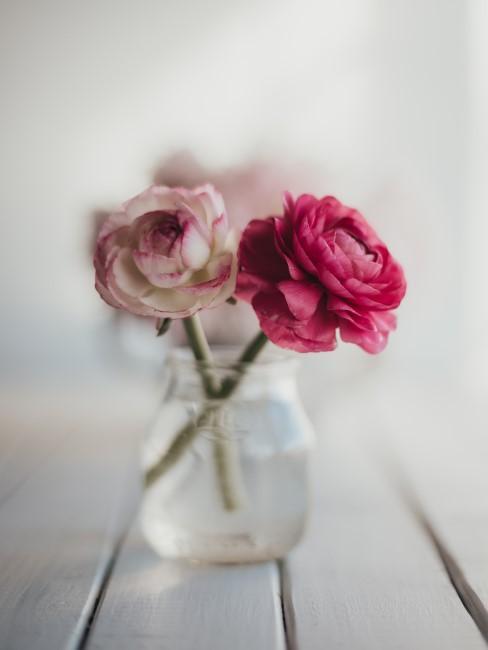 Ranunkeln in Rosa und Pink im Glas