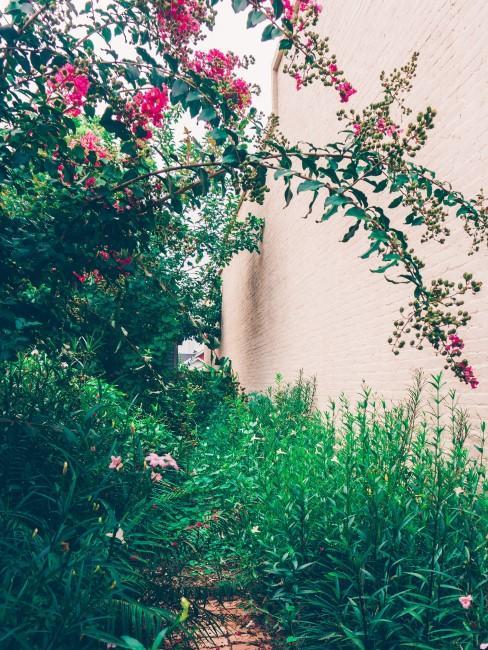 pink blühender Strauch im Garten
