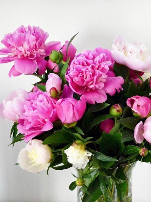 Pfingstrosenin Pink, Rosa und Weiß