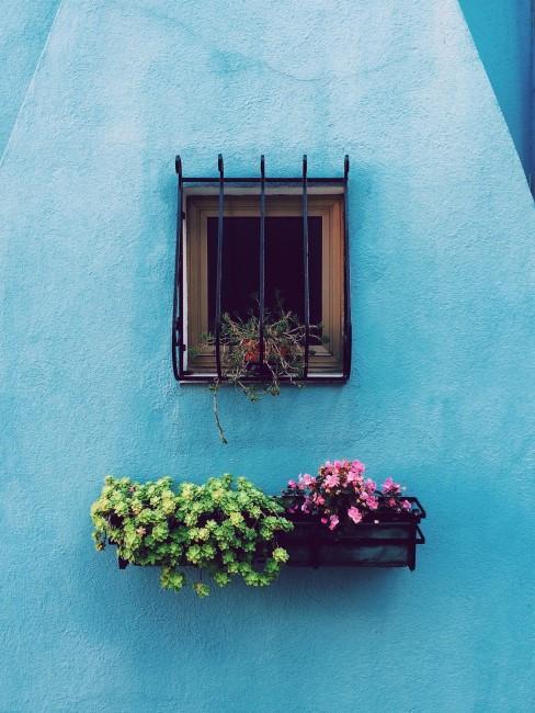rosa Blumen im Balkonkasten vor blauer Wand