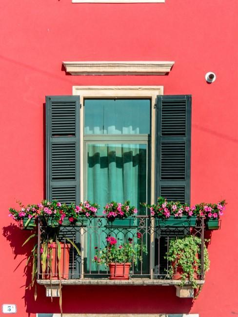 rosa Blumen in Balkonkästen vor roter Wand