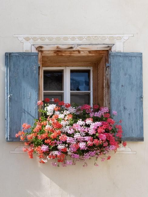 rote und rosa Blumen im Balkonkasten