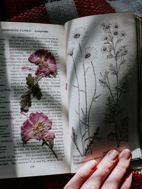 rosa Blumen gepresst in Buch