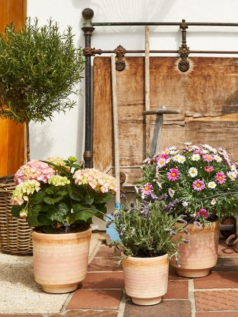 Kübelpflanzen in Rosa, Pink und Lila auf der Terrasse
