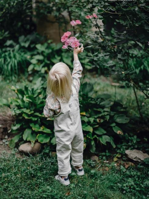 Rosa Rose im Garten mit Kind
