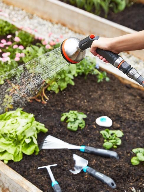 Hochbeet mit Gemüse wird gegossen
