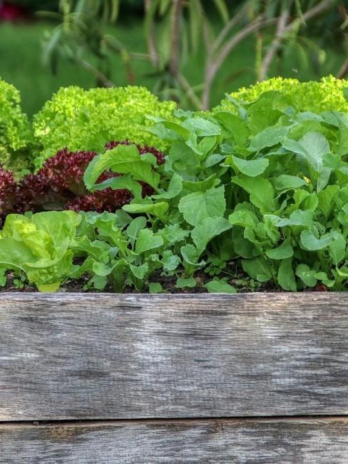 Ein Mini Hochbeet für Gemüse