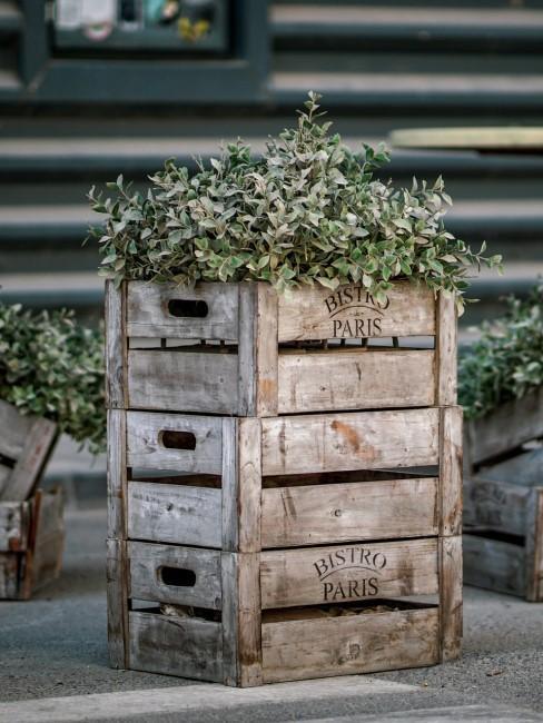 Weinkisten mit Pflanzen