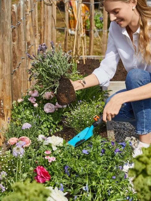 Hochbeet Bepflanzung mit Blumen