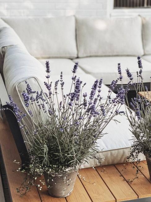 Lavendel im Übertopf auf der Terrasse