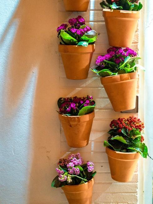 lila Balkonblumen in Töpfen an der Wand