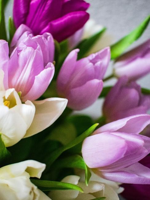 Tulpenstrauß in Lila und Weiß