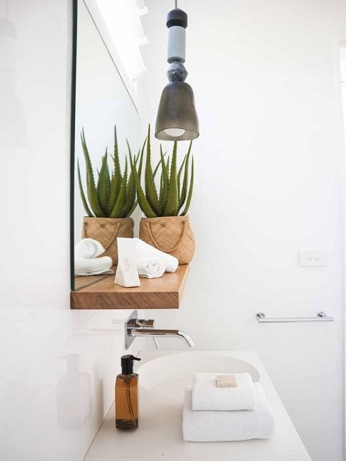 Aloe vera im Bad auf einem Regal am Badezimmerspiegel