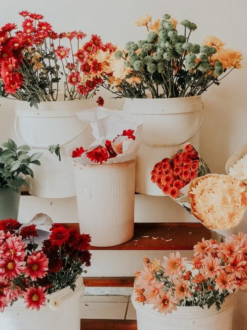 orange Blumen in unterschiedlichen Nuancen