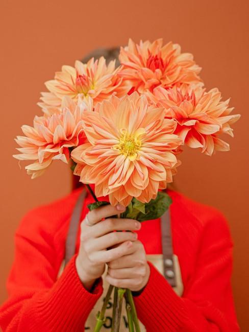 orange Dahlien Strauß als Geschenk