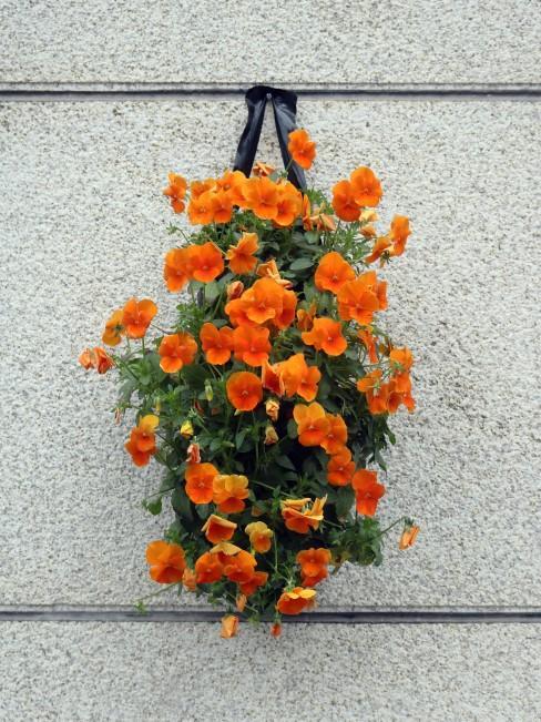 orange Blumen als Wanddeko
