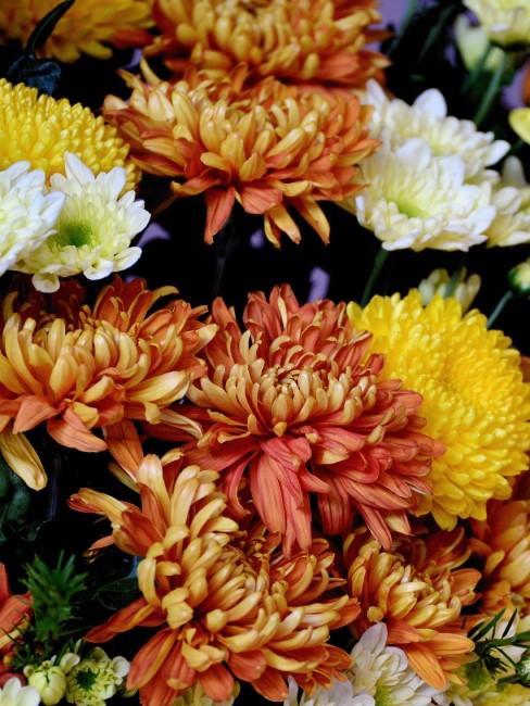 Chrysanthemen in Orange, Gelb und Weiß