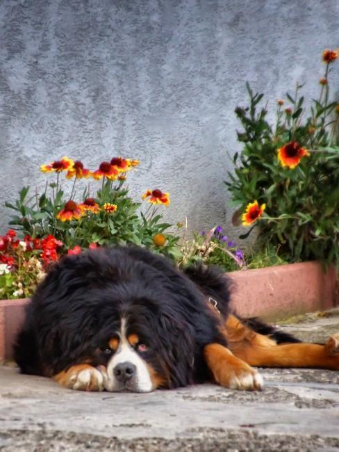 Orange Blumen mit Hund