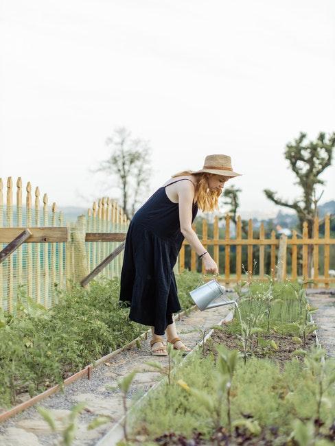 Garten mit Kräuterbeet gießen