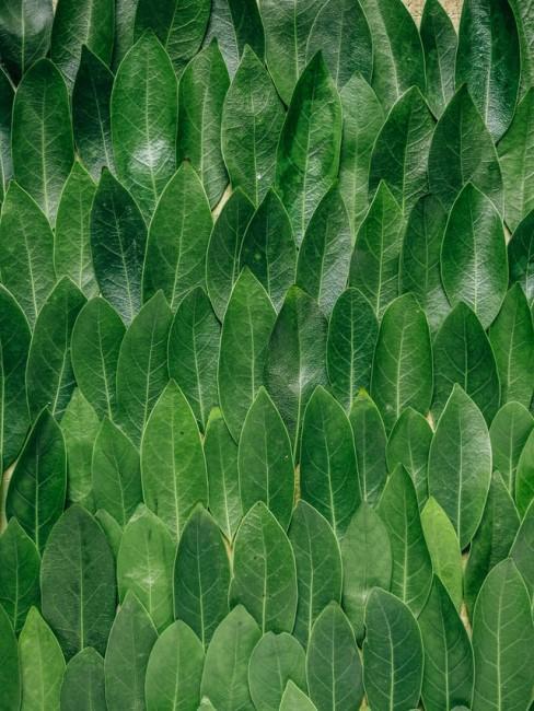 Chlorophyll als gesunde Ergänzung im Speiseplan