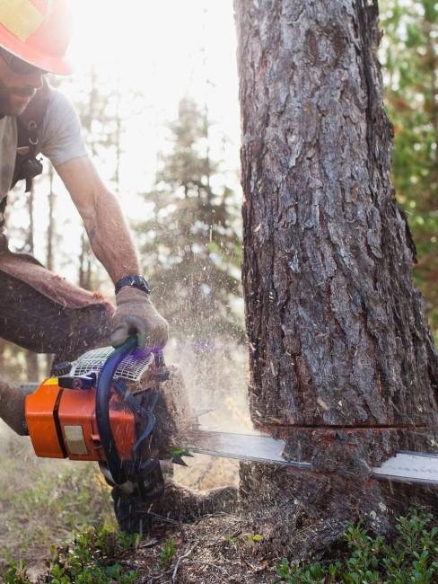 Bäume sicher und effektiv fällen