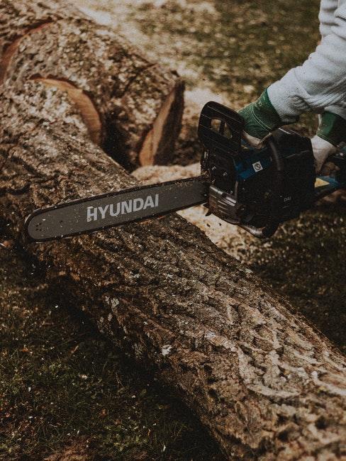 Professionelle Baumfällung auf dem Privatgrundstück