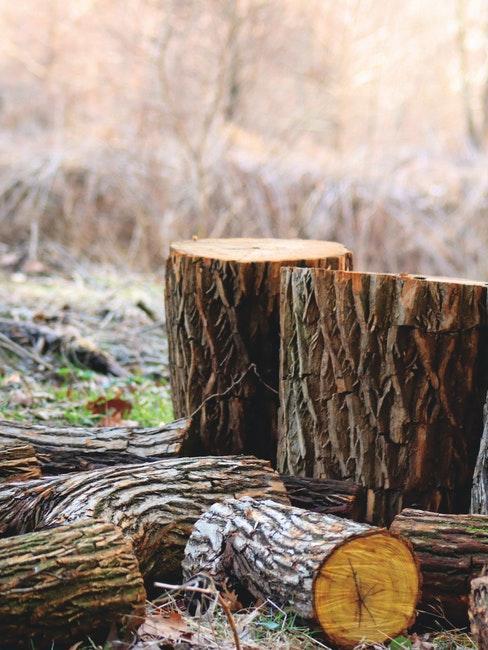 Baumstumpf nach dem Fällen