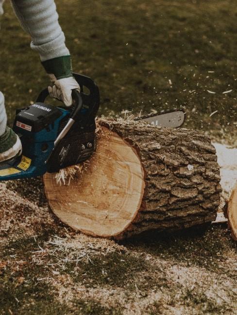 Stamm zersägen nach der Baumfällung