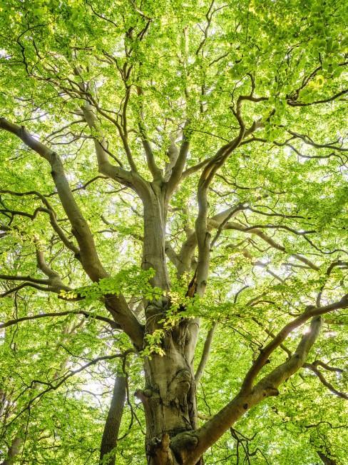 Grüner gesunder Baum im Garten