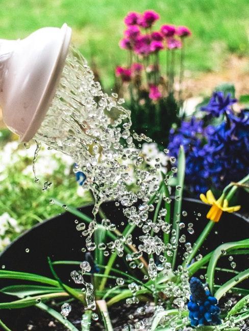 Blumenbeet richtig gießen
