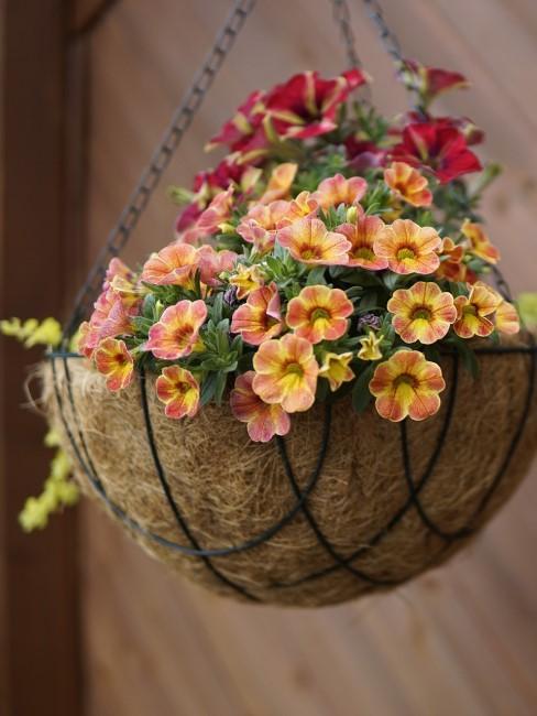 orange Balkonblumen im hängenden Korb