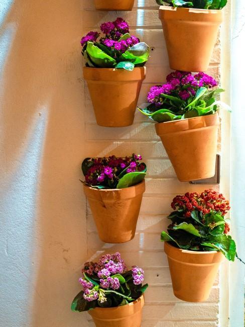 Vertical Gardening auf dem Balkon