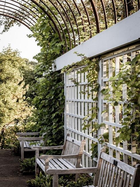Weißes Rankgerüst im Garten mit drei Sitzbänken