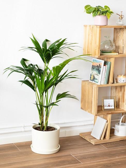 Schattenpflanze in einem weißen Topf vor einer weißen Wand neben einem Holzregal