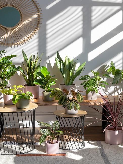 Schattenpflanzen in Töpfen auf einer Sitzbank vor einem Spiegel