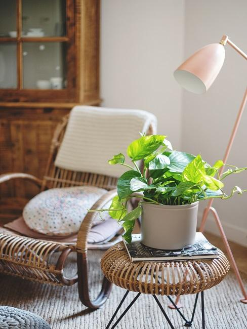 Schattenpflanze im Topf auf einem Beistelltisch im Wohnzimmer