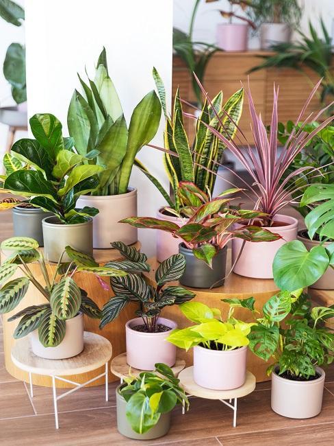 Gruppe von Schattenpflanzen in Töpfen
