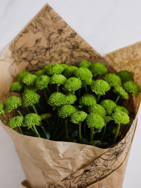 Blumenstrauß mit grünen Chrysanthemen als Geschenk